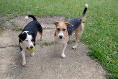 Zwei Hundespielen Lizenzfreie Stockfotos
