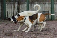 Zwei Hundespielen stockfotografie