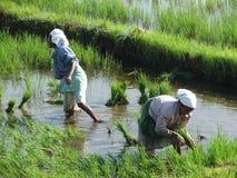 Zwei indische Frauen auf den Paddygebieten nach Tsunami Lizenzfreie Stockfotografie