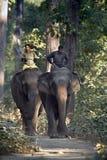 Zwei inländische Elefanten mit Mahouts in Nepal Stockfotos