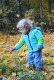 Zwei Jahre alte Junge, die Blumen in einem Herbstwald zupfen Lizenzfreie Stockfotos