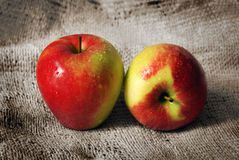 Zwei Jonagold Äpfel Stockfotografie