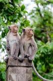Zwei junge Affen, die an der Spalte sitzen Stockbilder