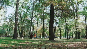 Zwei junge Frauen, die Hand in Hand laufen, und Hundefoxterrier In den Herbstwaldfallenden Blättern rütteln, Bäume, Bahn stock footage