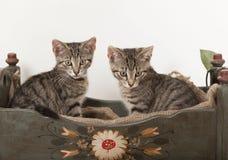 Zwei junge Katzen in der Krippe Lizenzfreies Stockbild