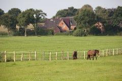Zwei junge Pferde auf Weide Lizenzfreie Stockfotografie