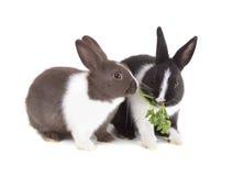 Zwei Junge stellen das Kaninchen in den Schatten, das einen Zweig der Petersilie isst Lokalisiert auf wh lizenzfreie stockfotos