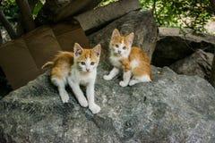 Zwei Kätzchen Stockfotografie