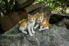 Zwei Kätzchen Lizenzfreie Stockbilder