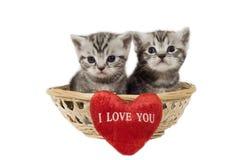 Zwei Kätzchen Stockbild
