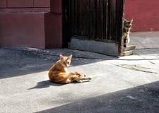 Zwei Kätzchen auf dem Bürgersteig stockfotos