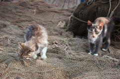 Zwei Kätzchen auf dem Fischernetz Stockfotos
