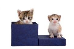 Zwei Kätzchen auf einem Geschenkkasten stockfoto
