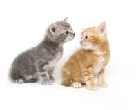 Zwei Kätzchen auf einem weißen Hintergrund lizenzfreies stockfoto