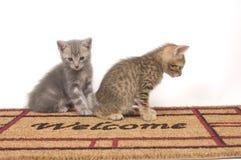 Zwei Kätzchen auf einer willkommenen Matte Lizenzfreie Stockbilder