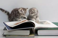 Zwei Kätzchen betrachten ein Buch Stockfoto