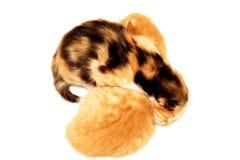 Zwei Kätzchen, die auf weißem Hintergrund liegen lizenzfreies stockbild
