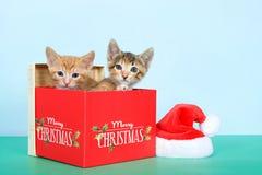 Zwei Kätzchen in einem Weihnachtskasten Stockfoto