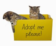 Zwei Kätzchen im Papierkasten stockfoto