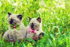 Zwei Kätzchen mit einer Fliege auf einem grünen Rasen lizenzfreies stockbild