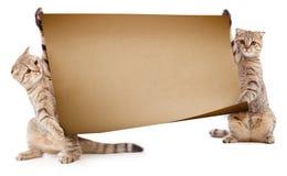 Zwei Kätzchen mit Schild oder Fahne Stockbilder
