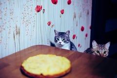 Zwei Kätzchen sitzen vor der Tabelle lizenzfreie stockfotos
