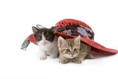Zwei Kätzchen unter einem Strohhut stockfoto