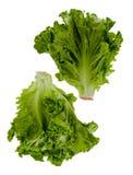 Zwei Köpfe Kopfsalat Stockfoto