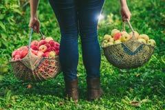 Zwei Körbe von Äpfeln Lizenzfreie Stockfotos
