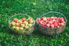 Zwei Körbe von Äpfeln Lizenzfreie Stockbilder