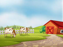 Zwei Kühe am Bauernhof mit einer Scheune und einem Zaun Stockfoto