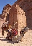 Zwei Kamele nahe alten Ruinen in PETRA Lizenzfreie Stockfotos