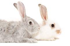 Zwei Kaninchen Stockfoto