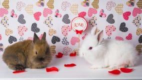 Zwei Kaninchen auf dem Hintergrund von Herzen Lizenzfreie Stockfotos