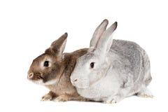Zwei Kaninchen auf einem weißen Hintergrund Stockbilder