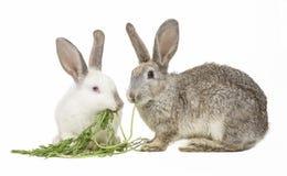 Zwei Kaninchen, die Karottenblätter essen Stockfotografie