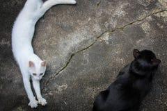 Zwei Katze faules 1 Stockbild
