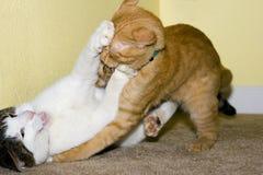 Zwei Katze-Spielen stockfoto