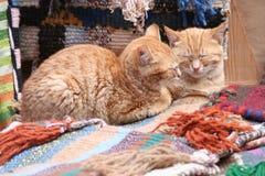 Zwei Katzen Stockbilder