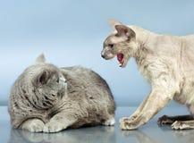 Zwei Katzen lizenzfreies stockbild