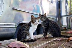 Zwei Katzen Stockbild