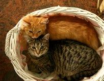 Zwei Katzen Stockfoto