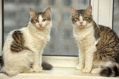 Zwei Katzen auf dem Fensterbrett Lizenzfreie Stockfotografie