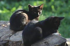 Zwei Katzen auf einem Klotz Stockfotos