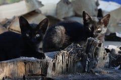 Zwei Katzen auf einem Klotz Stockfoto