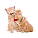 Zwei Katzen in der Liebe Lizenzfreies Stockfoto