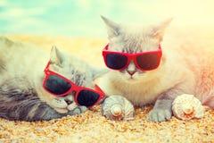 Zwei Katzen, die auf dem Strand sich entspannen lizenzfreie stockfotos