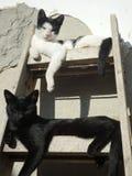 Zwei Katzen, die auf der Leiter stillstehen stockbild