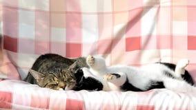 Zwei Katzen, die auf einem Schwingen schwingen stock video footage