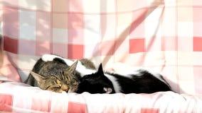 Zwei Katzen, die auf einem Schwingen schwingen stock video